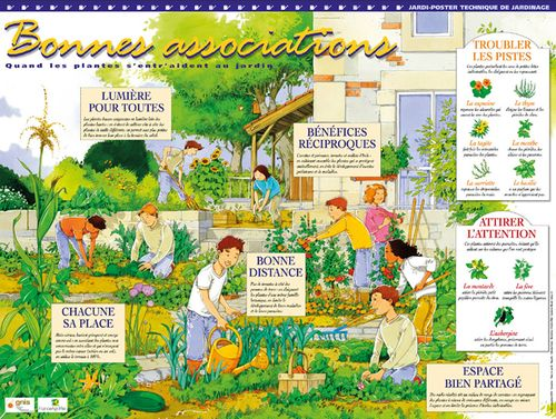 Bonnes associations for Association plantes jardin