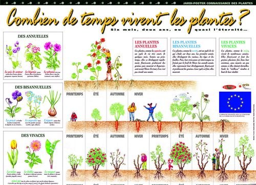 Commander des plantes composition deuil plantes tons for Catalogue de plantes par correspondance
