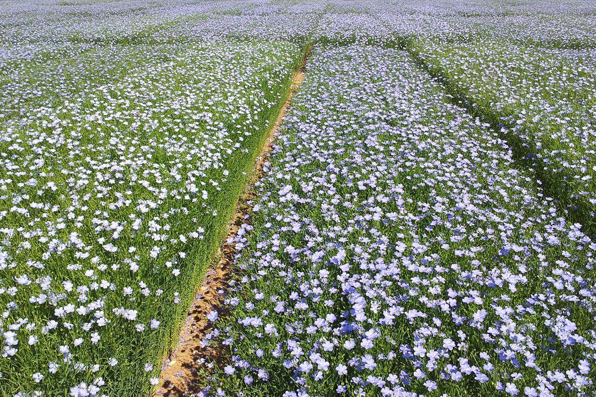 Kit p dagogique histoire de la domestication du bl for Commander des plantes