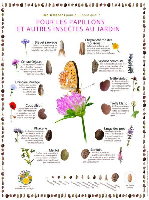 Des semences pour les papillons et autres insectes du jardin - Abris pour insectes du jardin ...