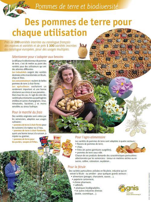 Conserver et multiplier la biodiversit des pommes de terre - Conservation pommes de terre cuites ...