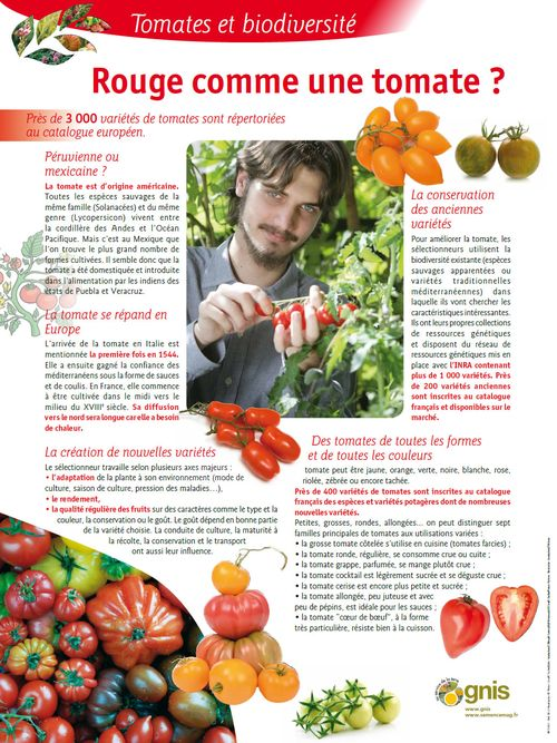 Lire :Rouge comme une tomate ?