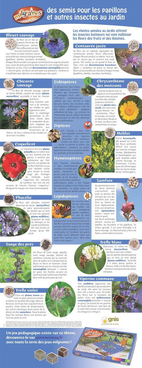 Poster des semis pour les papillons et autres insectes au jardin - Plantes pour papillons ...