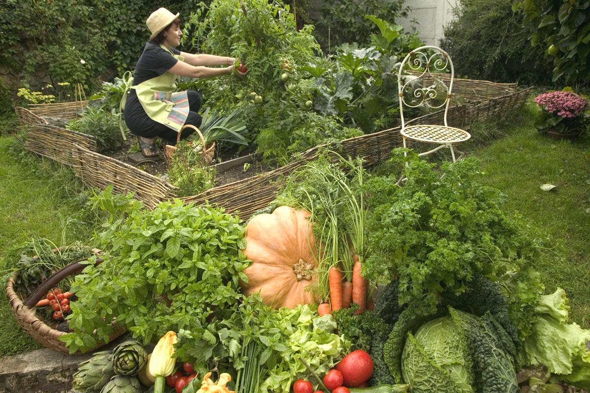 Des L Gumes Vari S La Meilleure Des Assurances Sant