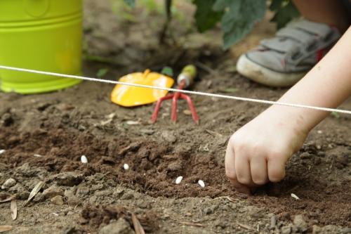C est quoi une semence for Graine de jardin